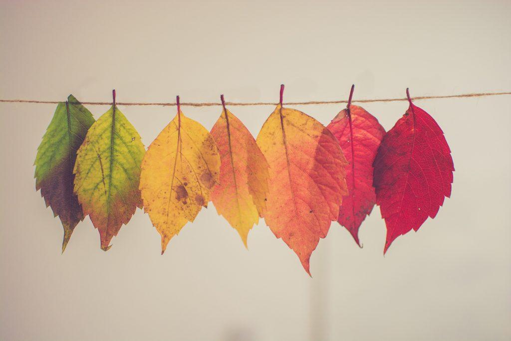 leaf transformation